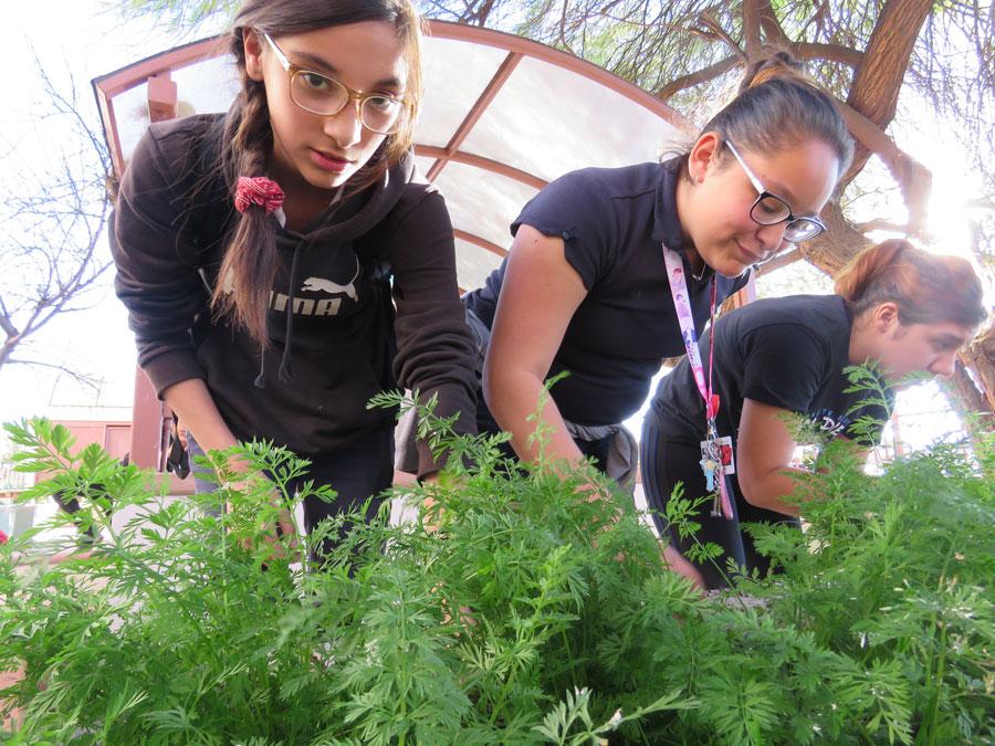 The Lapan Sunshine Foundation Gardening Club